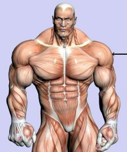 HOW TO MAKE STEROIDS INJECTIONS?